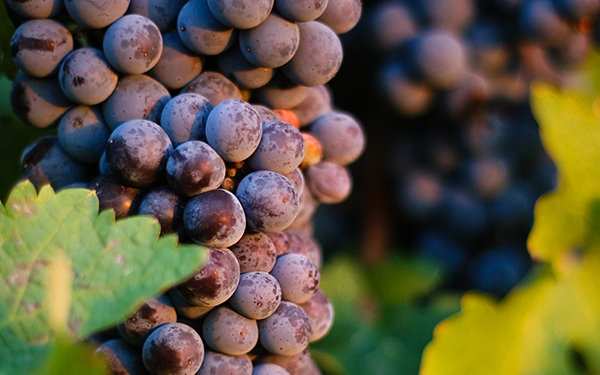 Walla Walla Vineyards Image